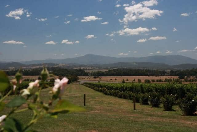 Hunter Valley Private Wine Tours From Sydney