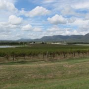 hunter valley vineyard