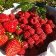 Strawberry-farm-melbourne