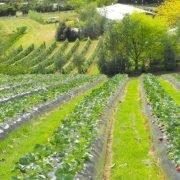 strawberry-fields-melbourne
