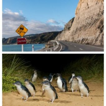 Great Ocean Road and Phillip Island in one day