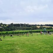 mornington-winery-tour